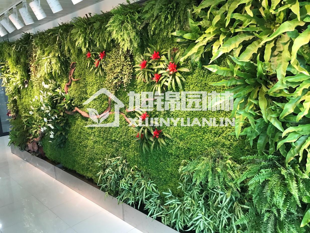 成都室内植物墙