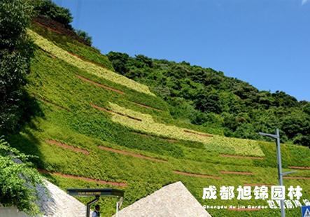 护坡挡土墙垂直绿化