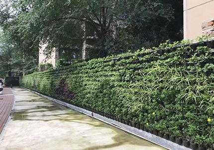 万年场社区室外垂直绿化墙