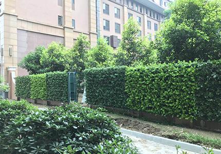 雅仕莱酒店垂直立体绿化