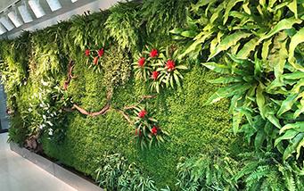 成都园林局办公室植物牆