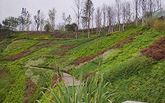 三岔湖护坡垂直綠化