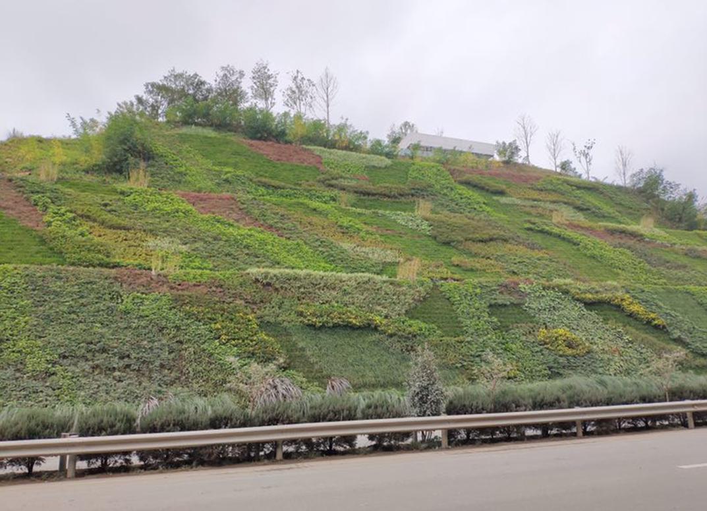 护坡垂直绿化