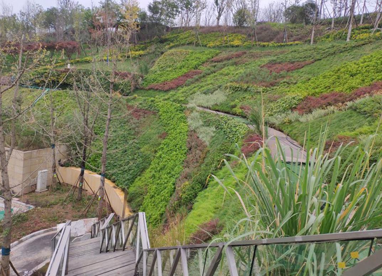 立体护坡绿化