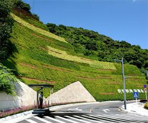 边坡垂直綠化
