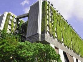 屋顶垂直綠化