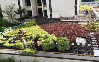 金地龙城中央屋頂綠化项目