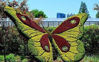 植物綠雕景观