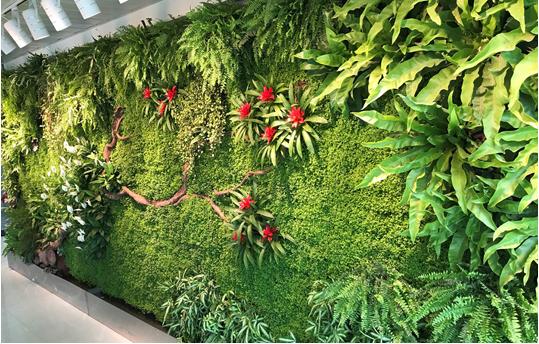 成都植物牆