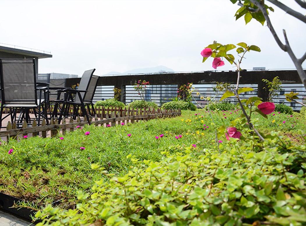 为什么要做屋頂綠化?