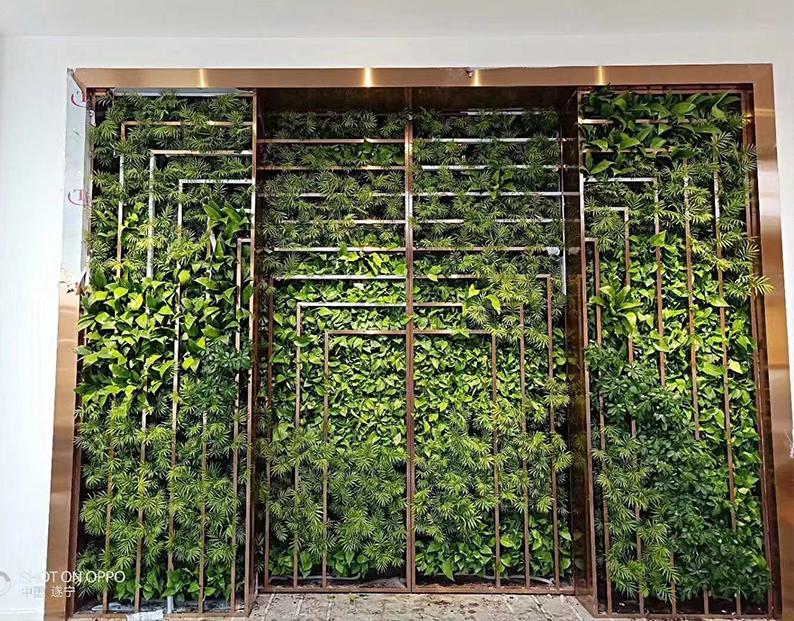 立体绿化,你可能不知道的一些功效!