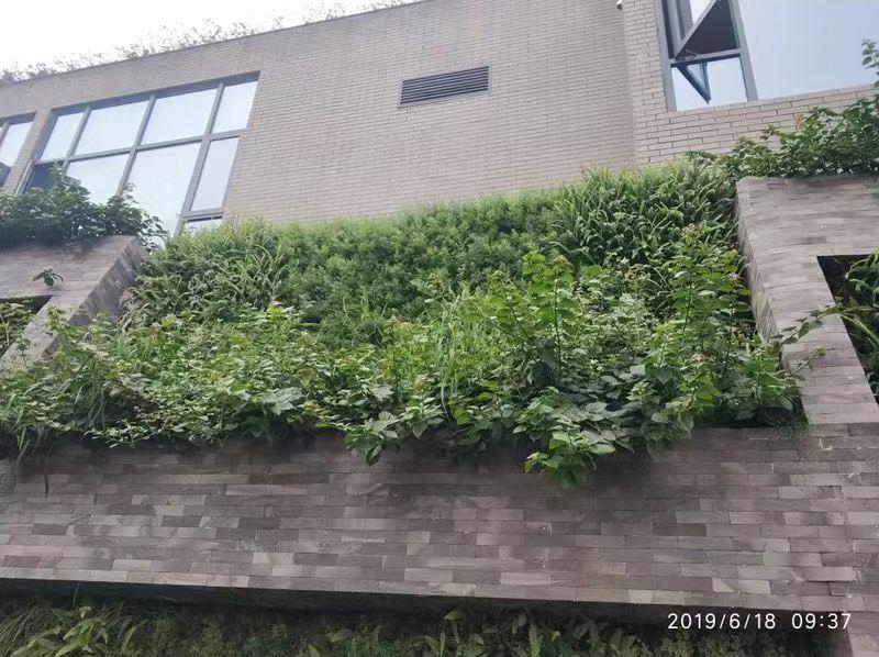 关于屋顶绿化你必须要知道的几件事