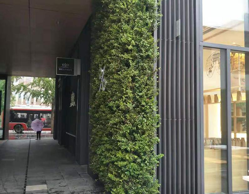 太古里咖啡厅室外垂直绿化