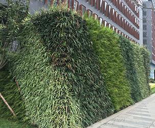 室内植物墙设计制作,需要注意这些规则!