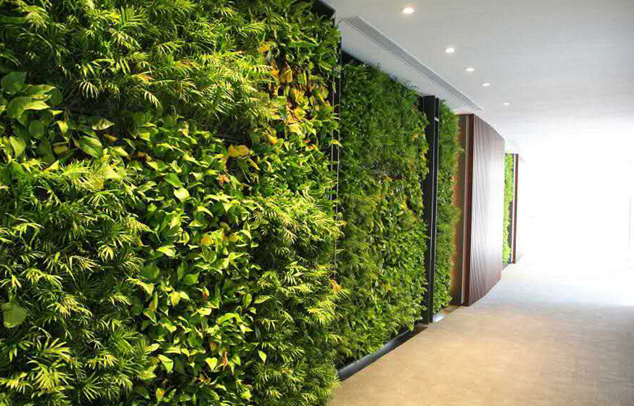 植物墙叶片怎么喷水