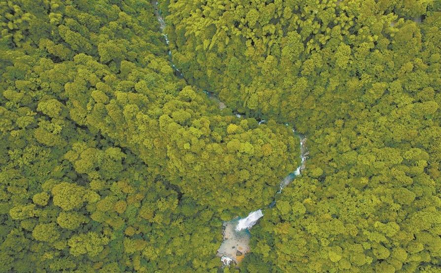 神农谷森林康养示范基地