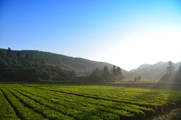 安化云上茶旅规划