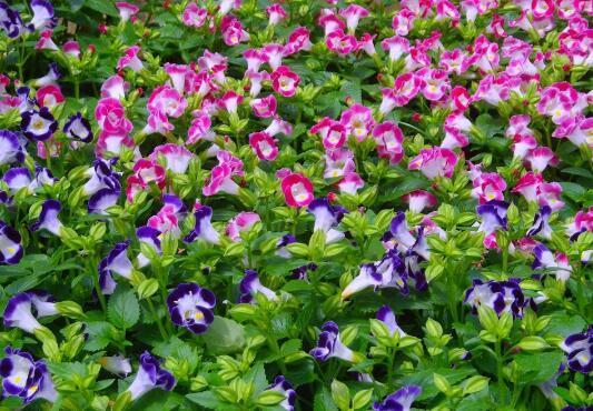 草花在园林绿化中具体有哪些作用