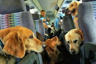 宠物火车托运