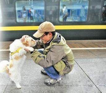 宠物火车托运公司