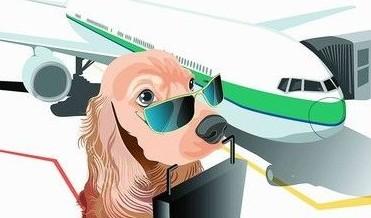 宠物飞机托运