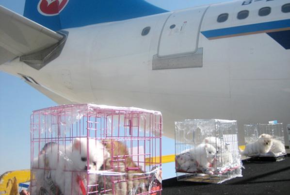 宠物飞机托运公司