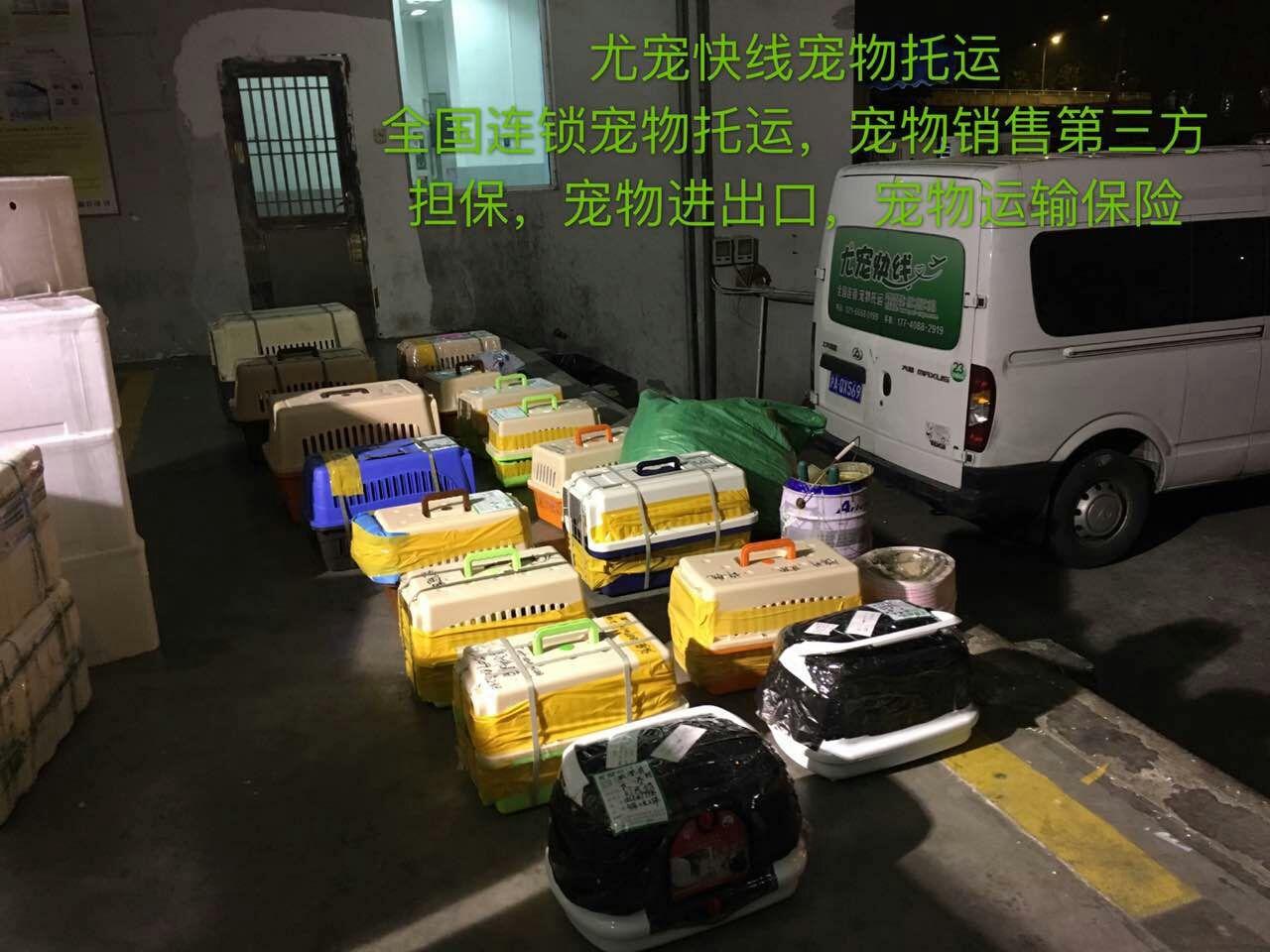 重庆宠物托运公司托运货物展示