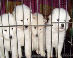 选择宠物出境,不经检疫出境,完全不用担心