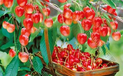 重庆江北豆豆农场里面的草莓樱桃采摘,烧烤好多人!