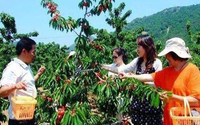 重庆主城最近,周末摘樱桃、草莓、钓鱼、露天烧烤全参考-重庆江北豆豆农场