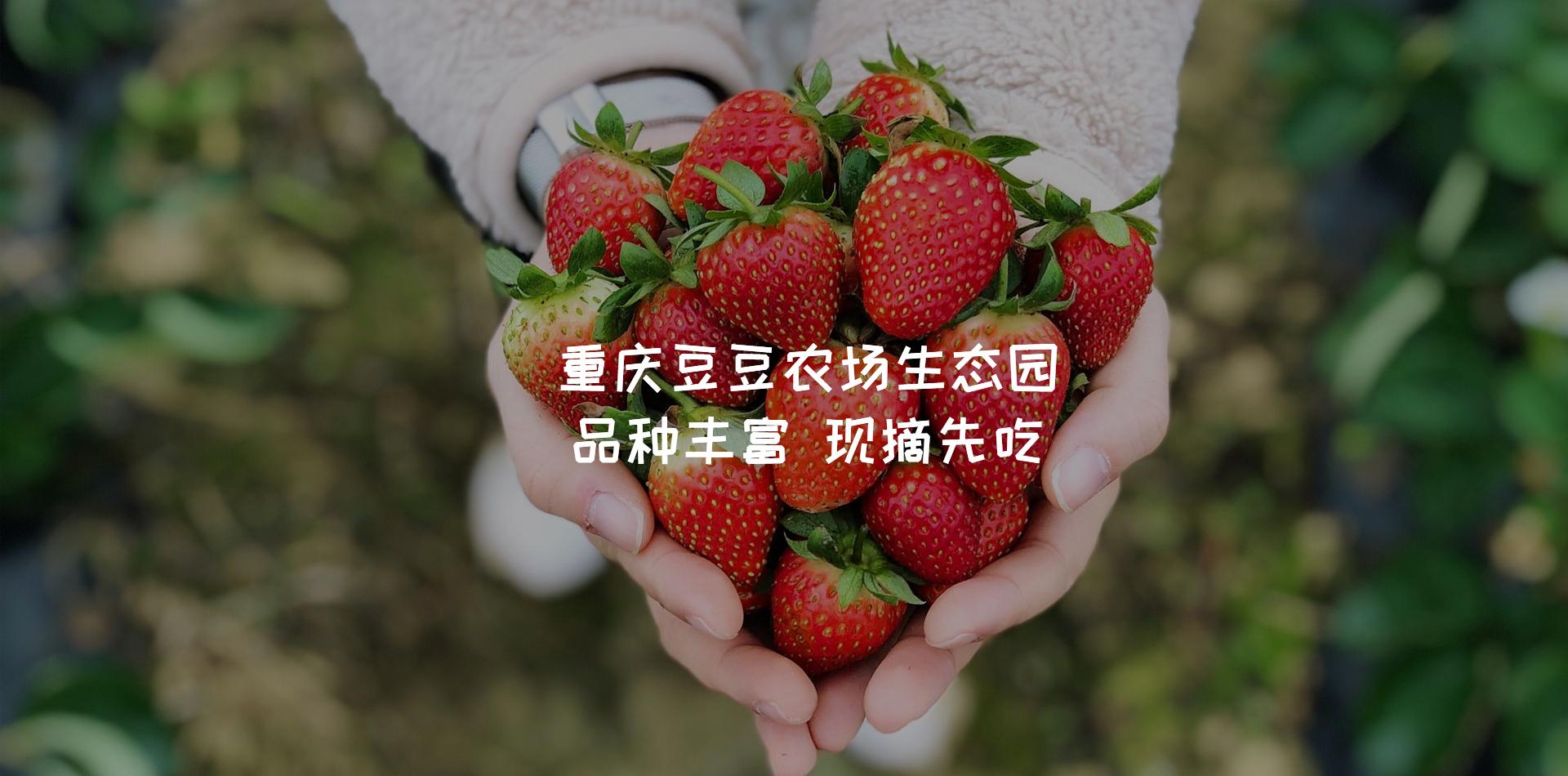 江北樱桃草莓采摘基地