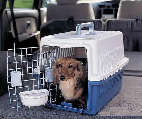 带宠物回国宠物托运你要知道这些