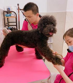 宠物美容培训
