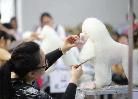 想学宠物美容怎样选择培训学校