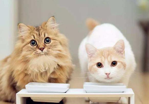 给猫喂生骨肉的7大好处