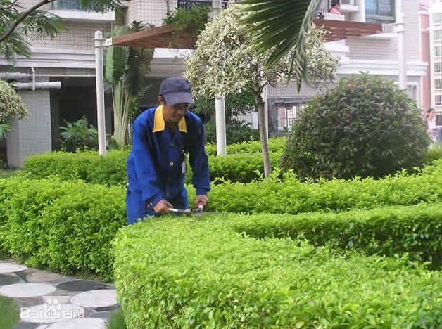 重庆绿化养护
