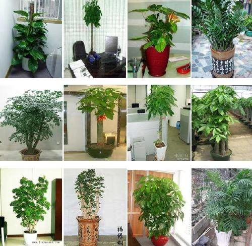 租滿2年植物花盆全部贈送