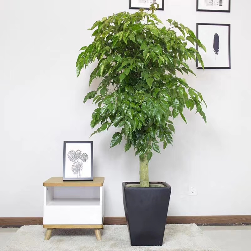 家庭植物出租