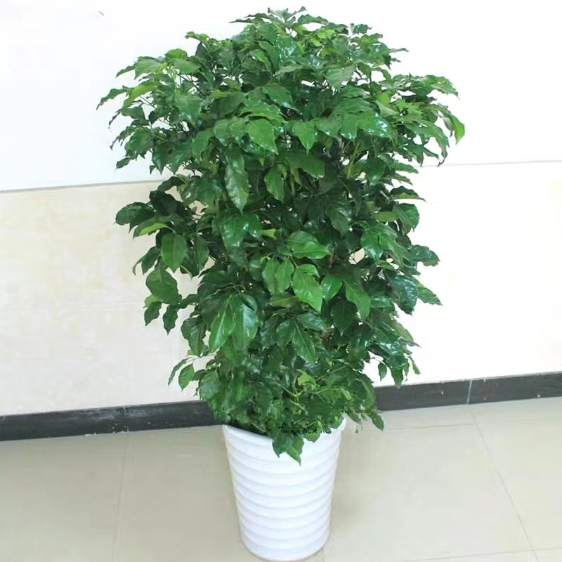 大型植物出租