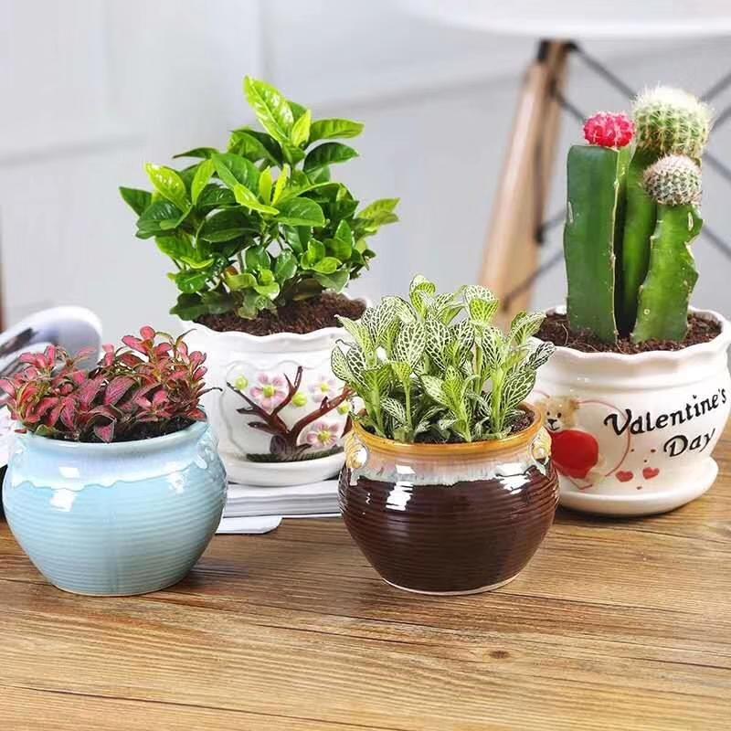 小型盆栽出租