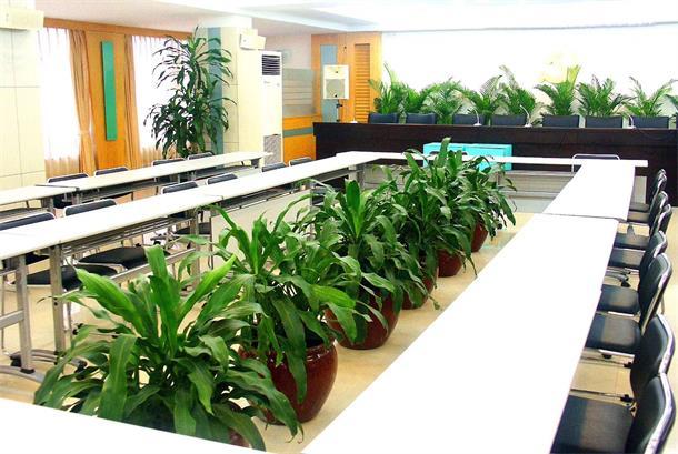 重庆办公室植物出租