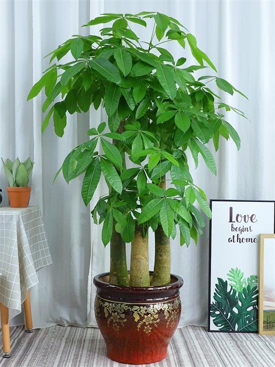 公司植物出租
