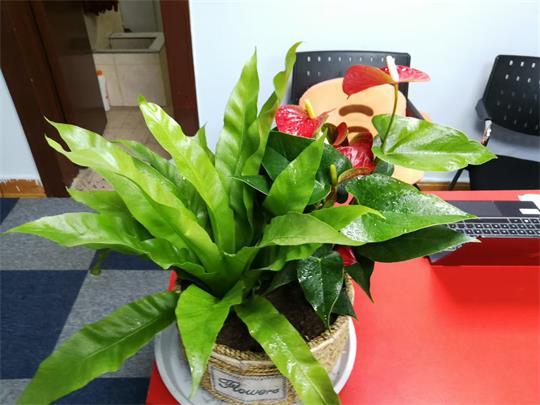 重庆办公室植物租赁
