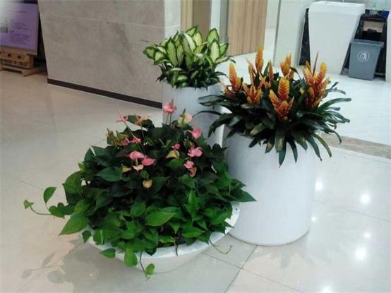 重庆商场植物出租