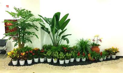 重庆植物出租