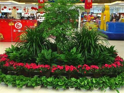 商场植物出租