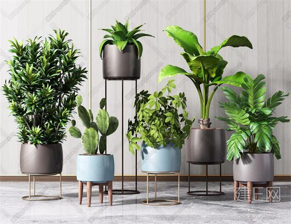 植物租赁公司