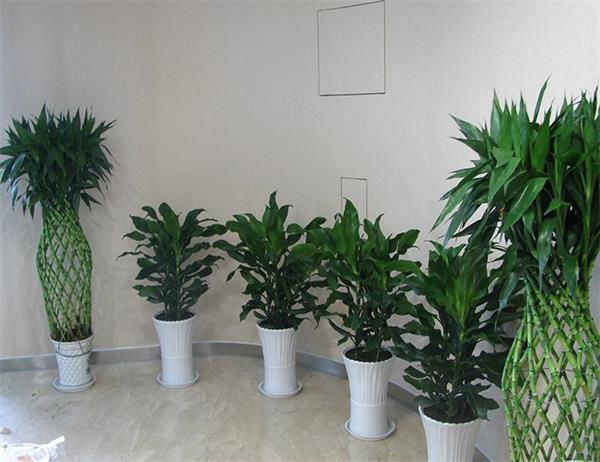 绿植出租案例