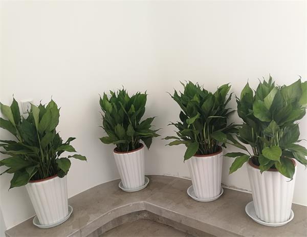 办公室植物出租案例