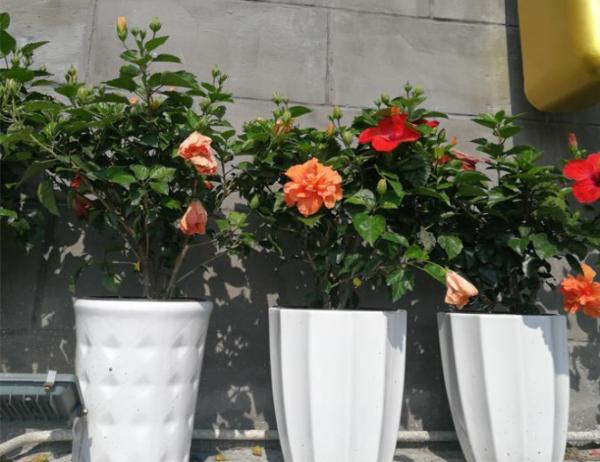 商场植物出租案例